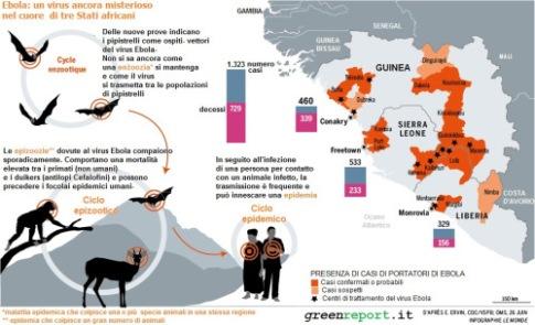 Diffusione-Ebola